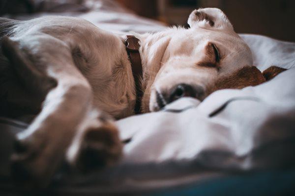 It's World Sleep Day!